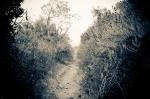 Oneil Park Path