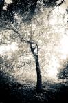 Oneil Park Tree