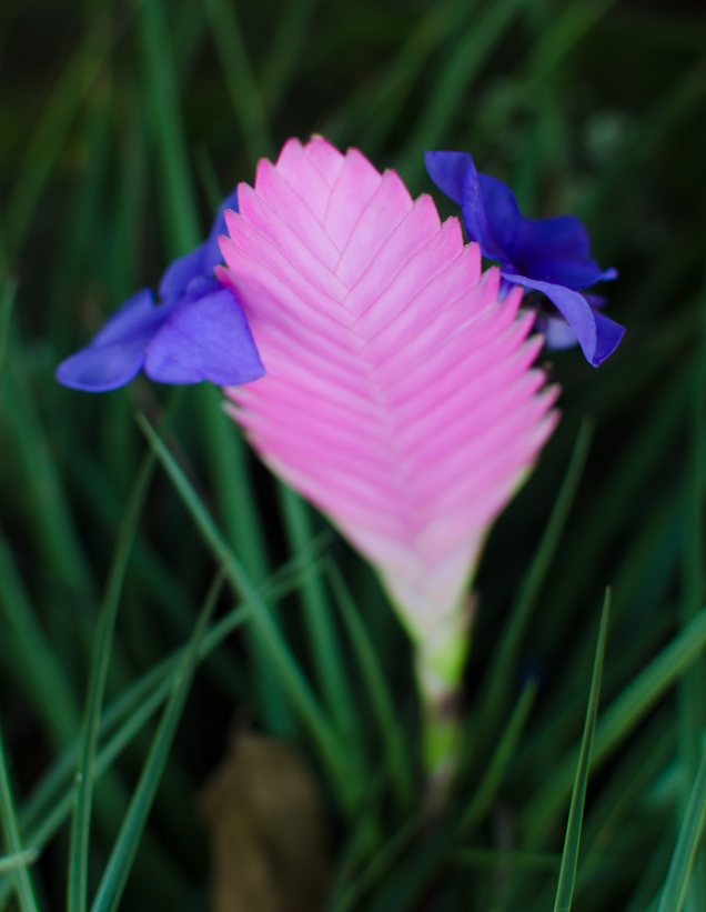 Flower - Kauai