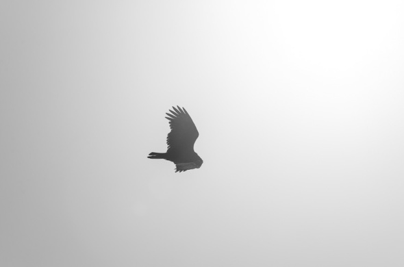 Cambria Birds-10