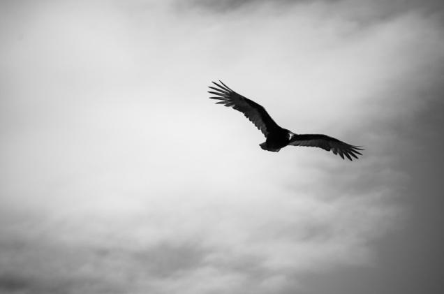 Cambria Birds-3