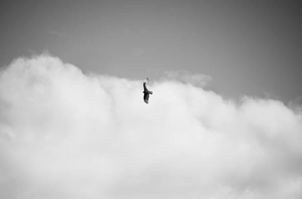 Cambria Birds-4