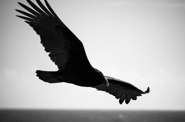 Cambria Birds-5