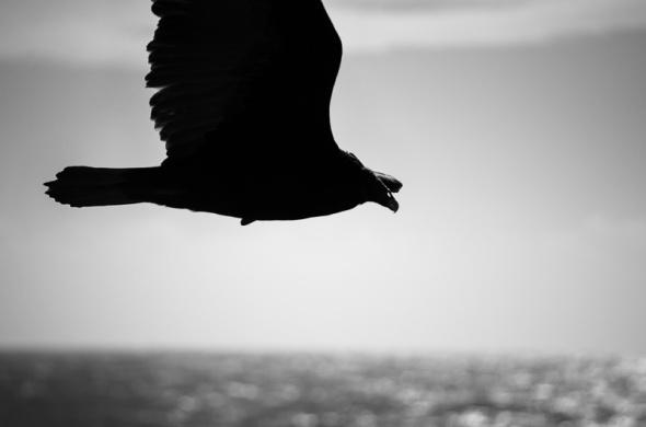 Cambria Birds-6
