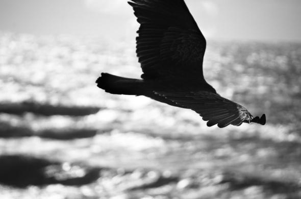 Cambria Birds-7