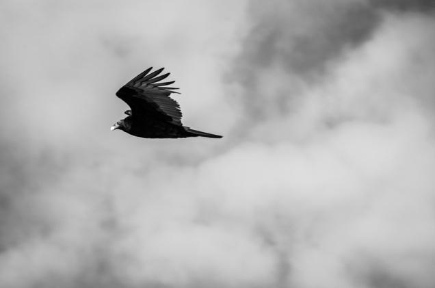 Cambria Birds-8