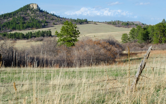 Spruce Mountain Open Space, Colorado, Larkspur