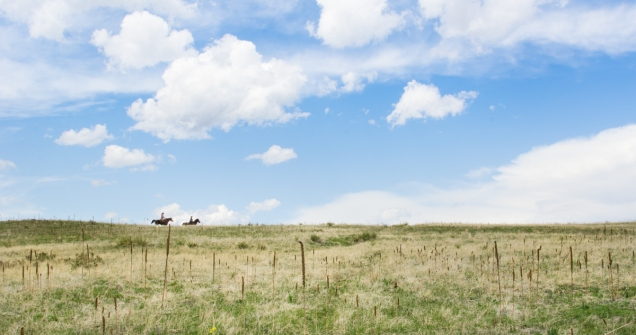 colorado, open space, horse, horse back riding, art, wall art, big sky
